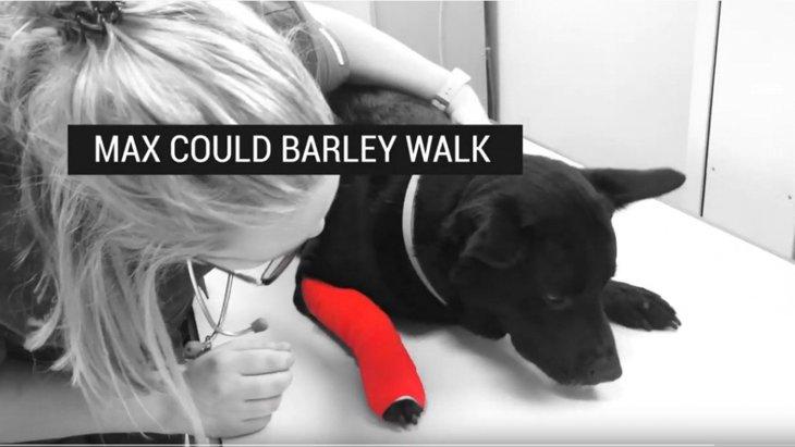 膝の脱臼で歩くたびに激痛…ほとんど歩けなかった犬を保護&手術で回復!