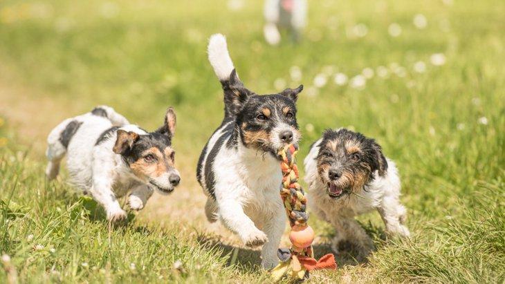 問題行動をさせないために!子犬の興奮をコントロールする方法