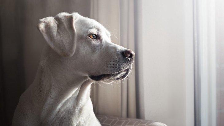 何を見てるの?犬が家の外を眺めている時の心理4つ