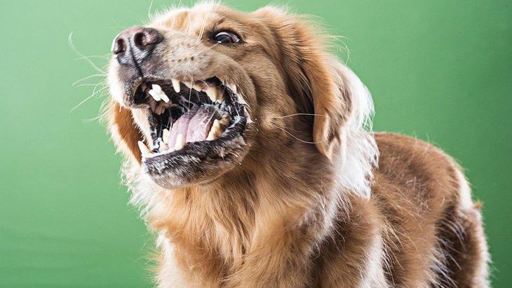 犬が急に怒るようになる原因と対処法