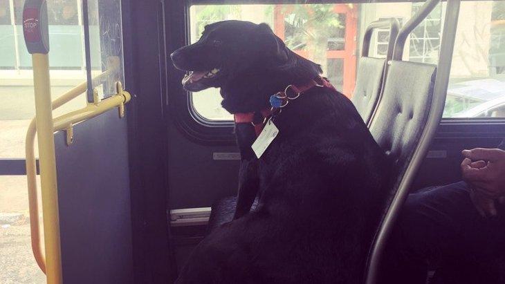 単独でバスに乗ってドッグパークに通う犬が人々の話題に!