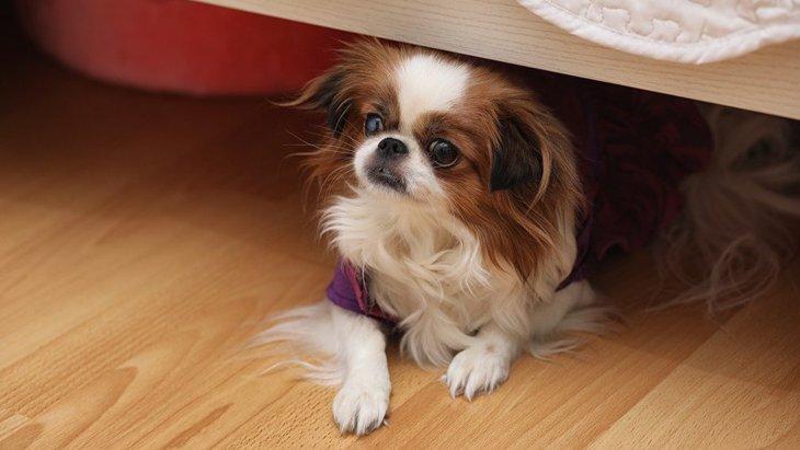 犬が家の中で隠れがちな場所6つ