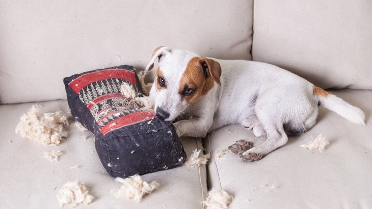 犬が家中を引っ掻いてしまう原因3つ!それぞれの対処法