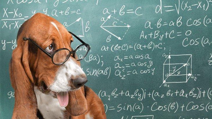 能力を引き出そう!犬の頭が良くなる育て方のコツ