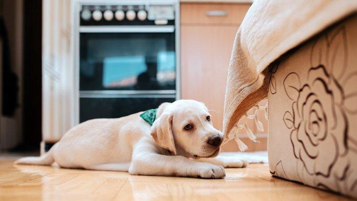 犬がモノを噛んで離さない時の『NG行為』3選