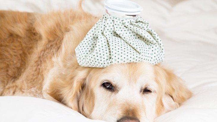 犬用ドリンクは熱中症対策におすすめの飲み物!