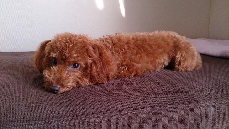 拾い食いの怖さ!愛犬がホウ酸団子を食べてしまった…。