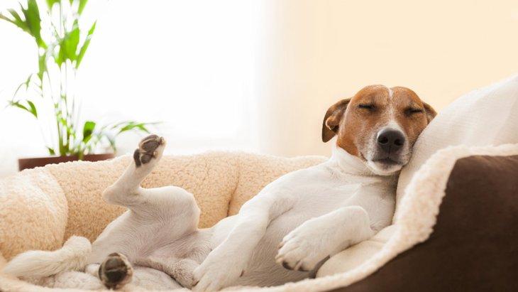 犬を新しい寝床に慣れさせる3つの方法
