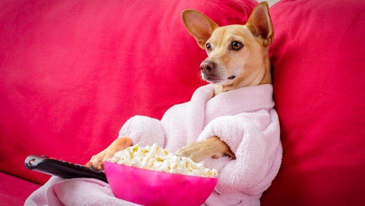 犬がリラックスできる空間を作る3つの方法