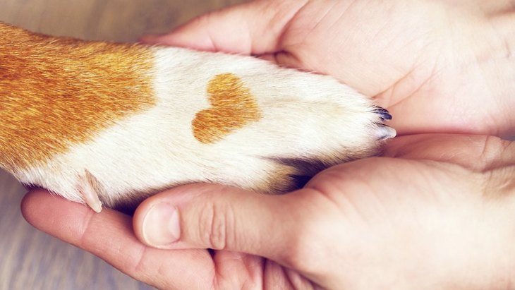 「犬が好き!」の気持ちは遺伝子に組み込まれているのかも【研究結果】