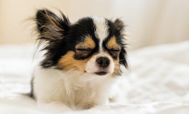 犬が眠るのを我慢している時によく見せる仕草6つ