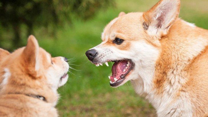 実はビビッてる?犬同士ですれ違う時に愛犬が吠えてしまう心理3つ