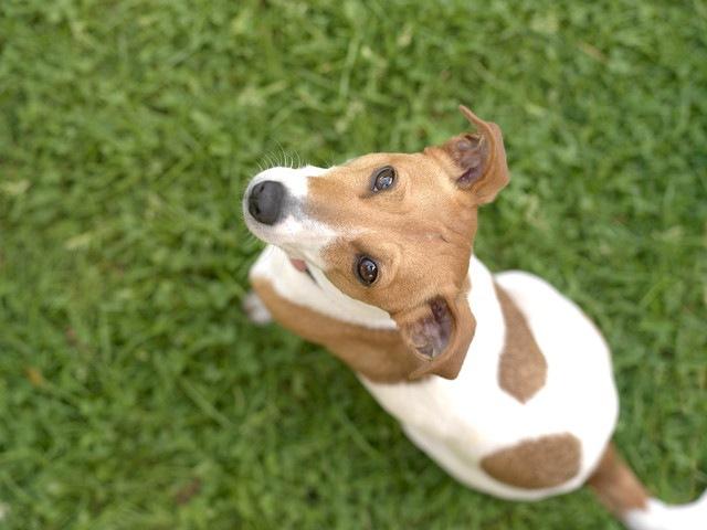 心に傷を負った犬に必要なたった1つのケア