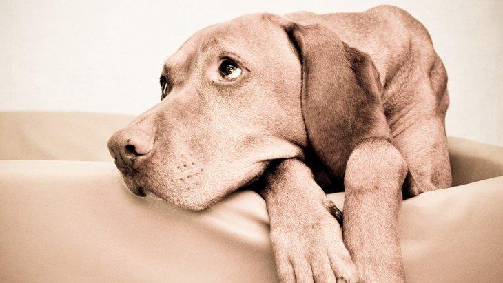 犬にとっての『不幸な環境』4つ