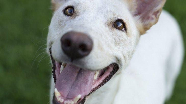 愛犬との幸せを感じる『3つの瞬間』