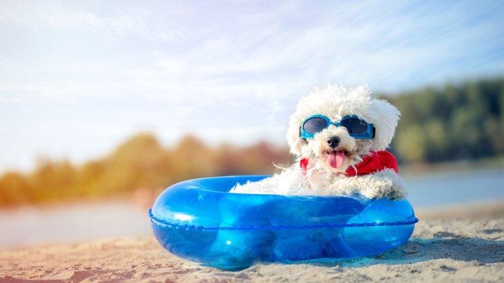 『犬用サングラス』を利用する4つのメリットとは?人と同じように病気予防につながる?