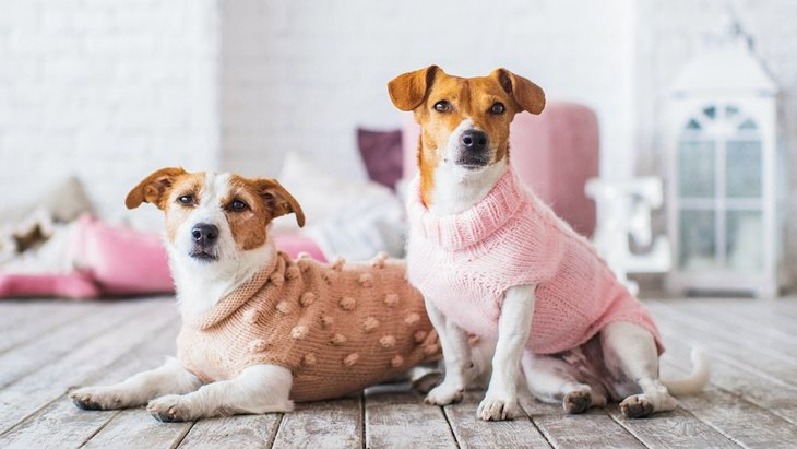 【あるある】愛犬が好きすぎてついやってしまう親バカ行動5つ