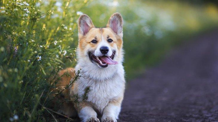 犬をポジティブにすることができる方法3選