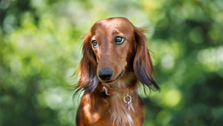 犬が『要求』をしてきた時にするべきではないNG行為4選