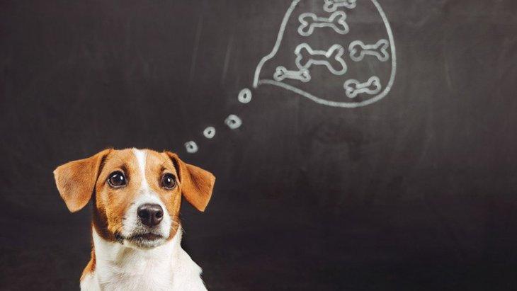 犬も人と同じように「考え事」をする?