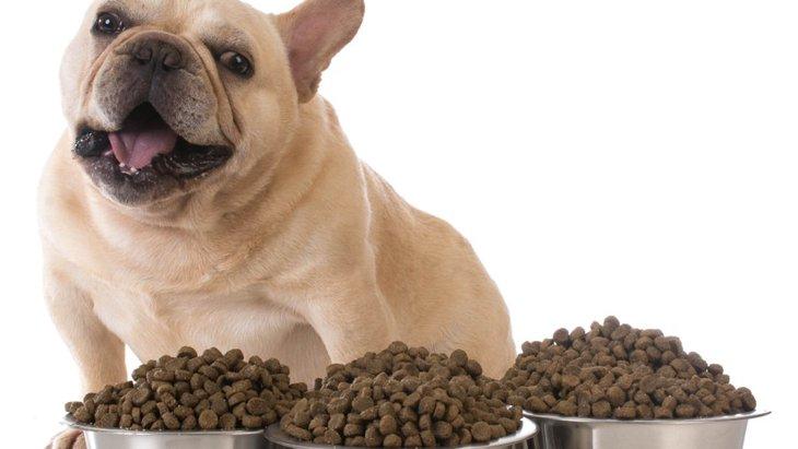 愛犬の食欲が異常にある時は要注意!4つの原因と可能性のある病気