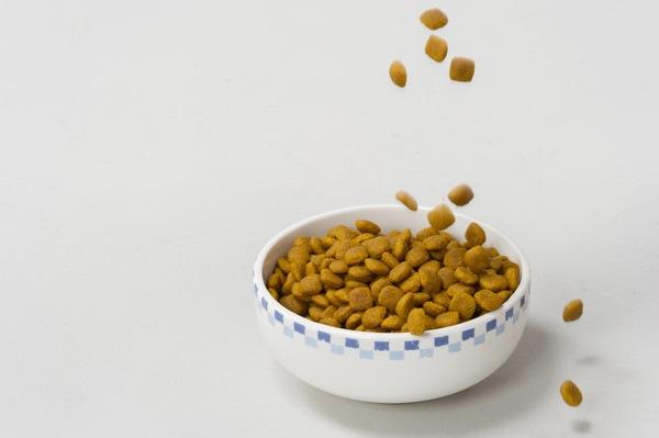 犬がキャットフードを食べてしまったら体調はどうなるのか