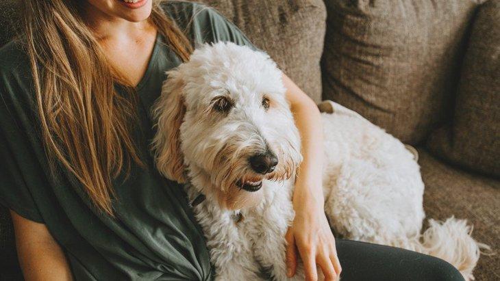 犬が飼い主に『頭をこすりつける時』の心理5選