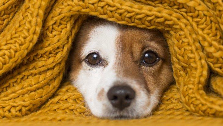 犬が寒がっている時の行動や仕草5つ