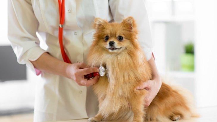 小型犬がかかりやすい3つの病気!症状から予防法まで