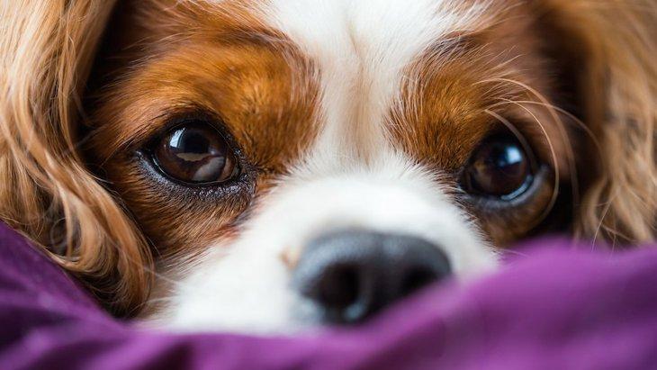 悲しいの?犬が目をウルウルさせてる画像12選