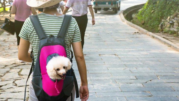 犬用リュック人気おすすめ8選!失敗しない選び方から注意点まで