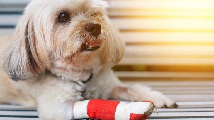 小型犬が最もかかりやすい病気4選