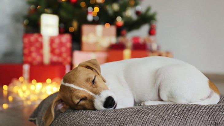 犬が大喜びする『クリスマスプレゼント』3つ