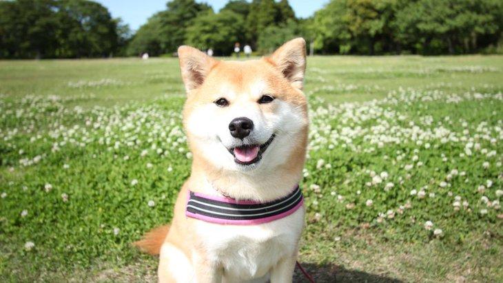 公園で犬のリードを外す危険性とは