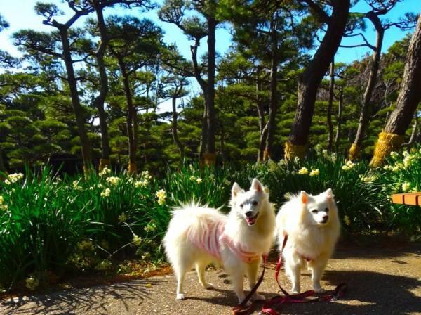 愛犬と一緒に三浦半島、城ヶ島公園へ!