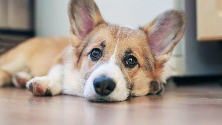 犬は室内飼いでもケガのリスクあり!室内特有の危険と事故防止策3つ