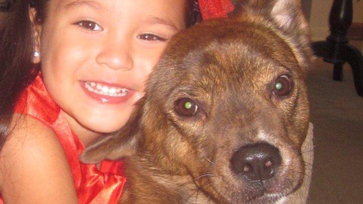 保護犬と里親家庭の女の子がともに過ごし成長する姿!愛情と努力は不変です