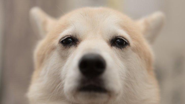 飼い主自身が作っている『犬のストレスの原因』とは?