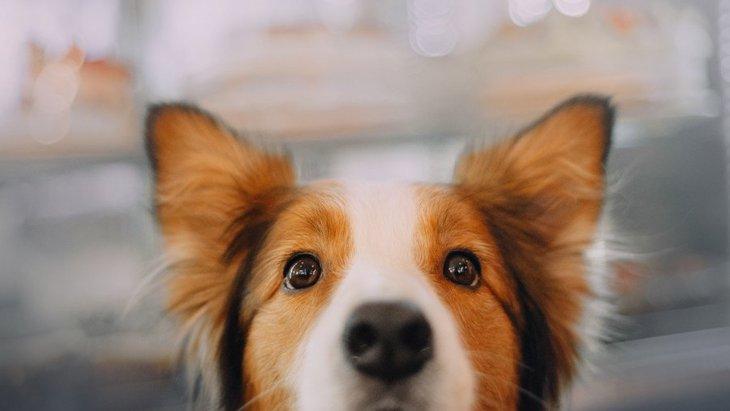 犬を長生きさせるには?いつまでも健康でいてもらうために意識すべきポイント