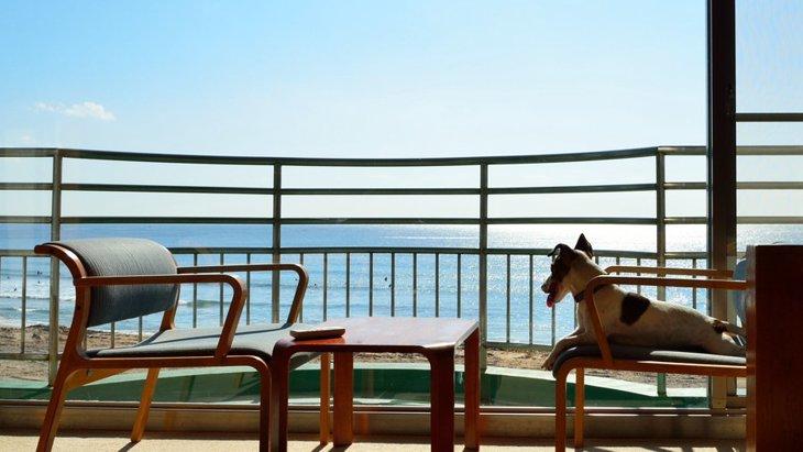 犬と泊まれる宿の選び方と守りたい4つのマナー