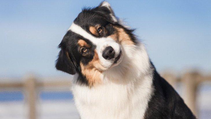 犬が絶対に振り向く『魔法の言葉』3選