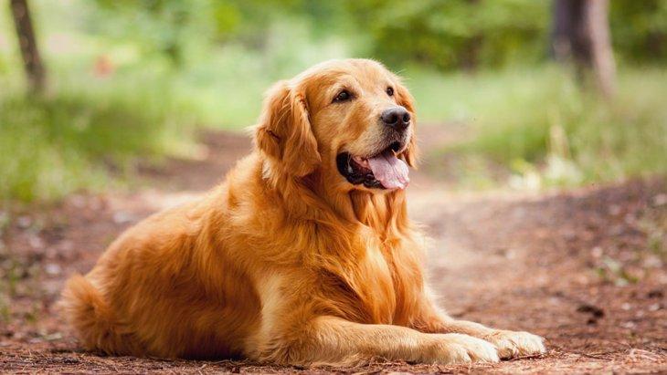寿命が短い犬種3選