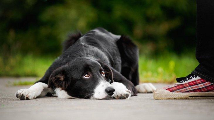 常識が無い犬の飼い主がよくやっている『3つのNG行為』