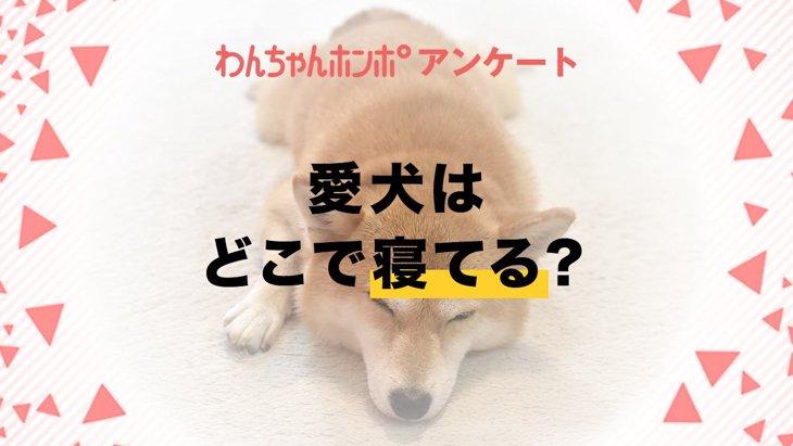 【アンケート実施中!】愛犬はどこで寝ていますか?