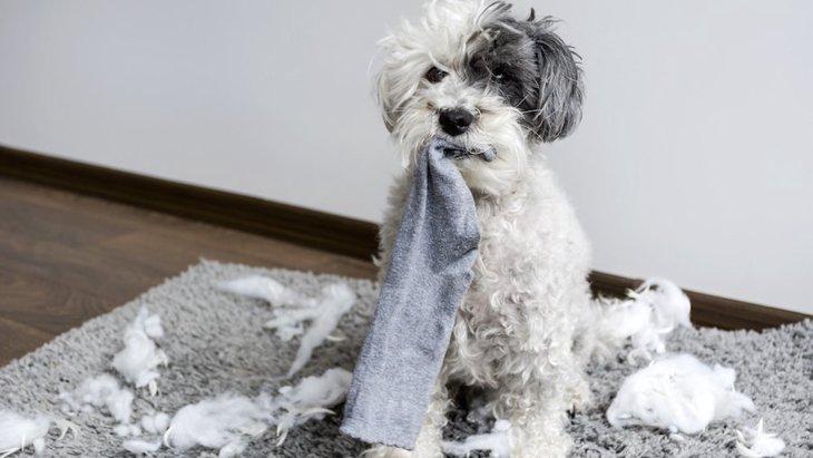 飼い主の「生活の質」は、犬の「生活の質」に直結しているという研究結果