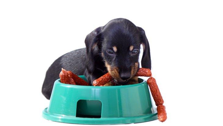 うちの子だけ?子犬がご飯の時に逆立ちしてしまうのはなぜ?