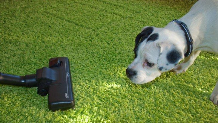 犬が掃除機に向かって吠える!噛みつく!どうすればいいの?