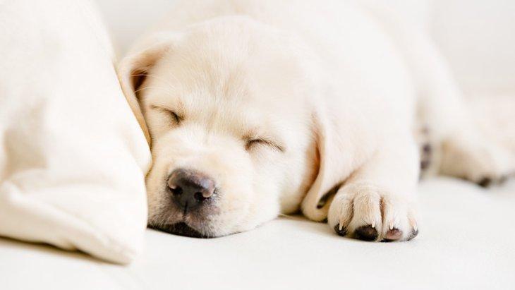 愛犬にとって最適な環境ですか?11個のチェックで快適に!