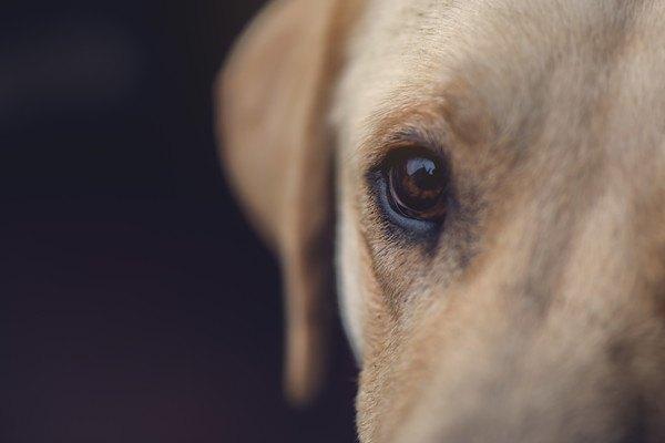 犬の「眼」の仕組みや見る世界について