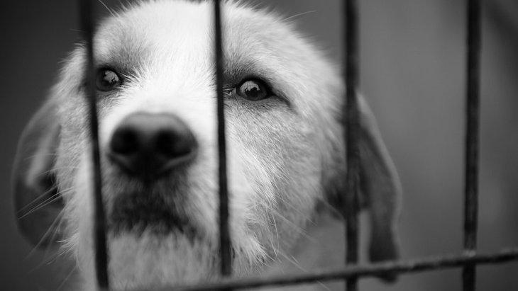 近所で犬の虐待を見かけた時に取るべき行動と注意すべきポイント
